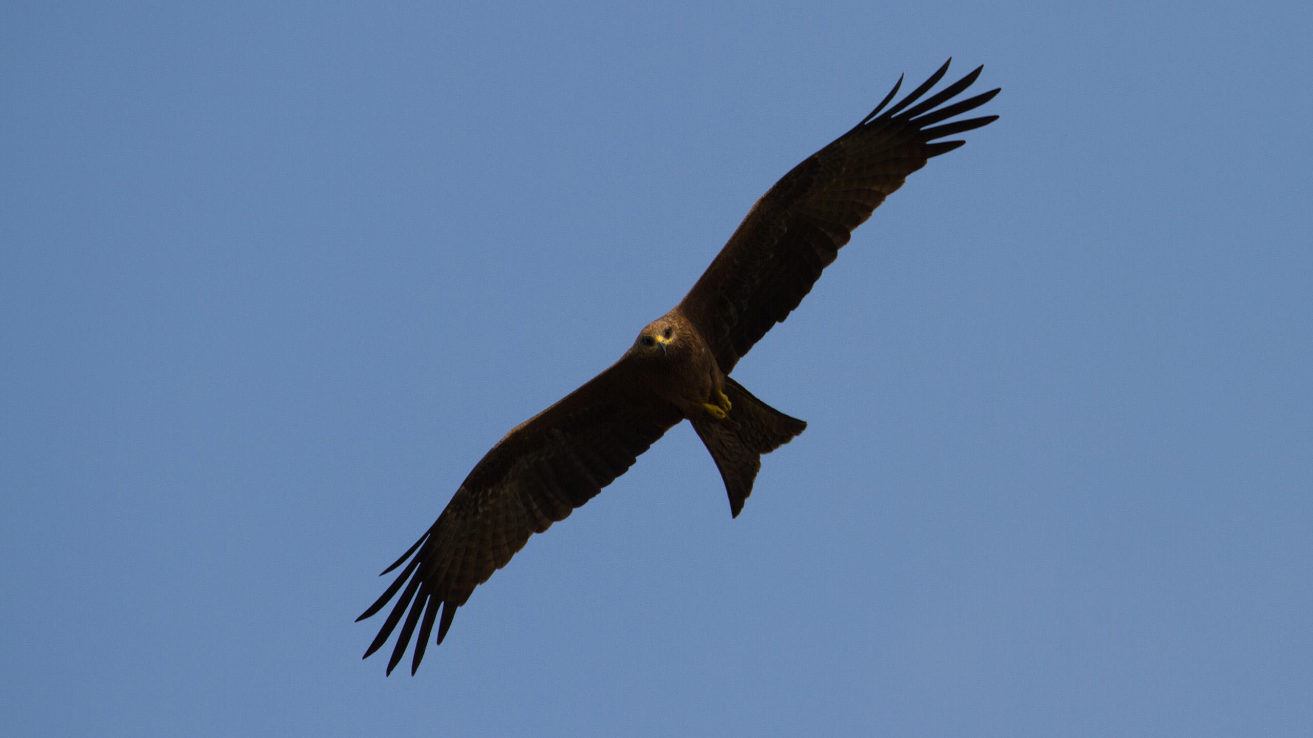 Eagle NOMAD