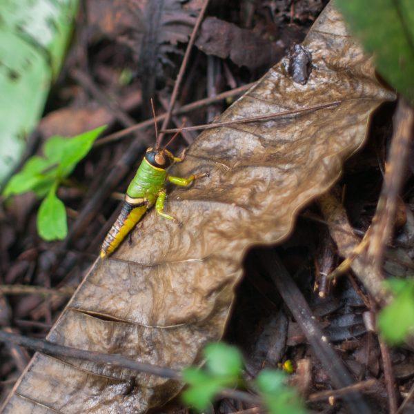 Cricket in Costa Rica