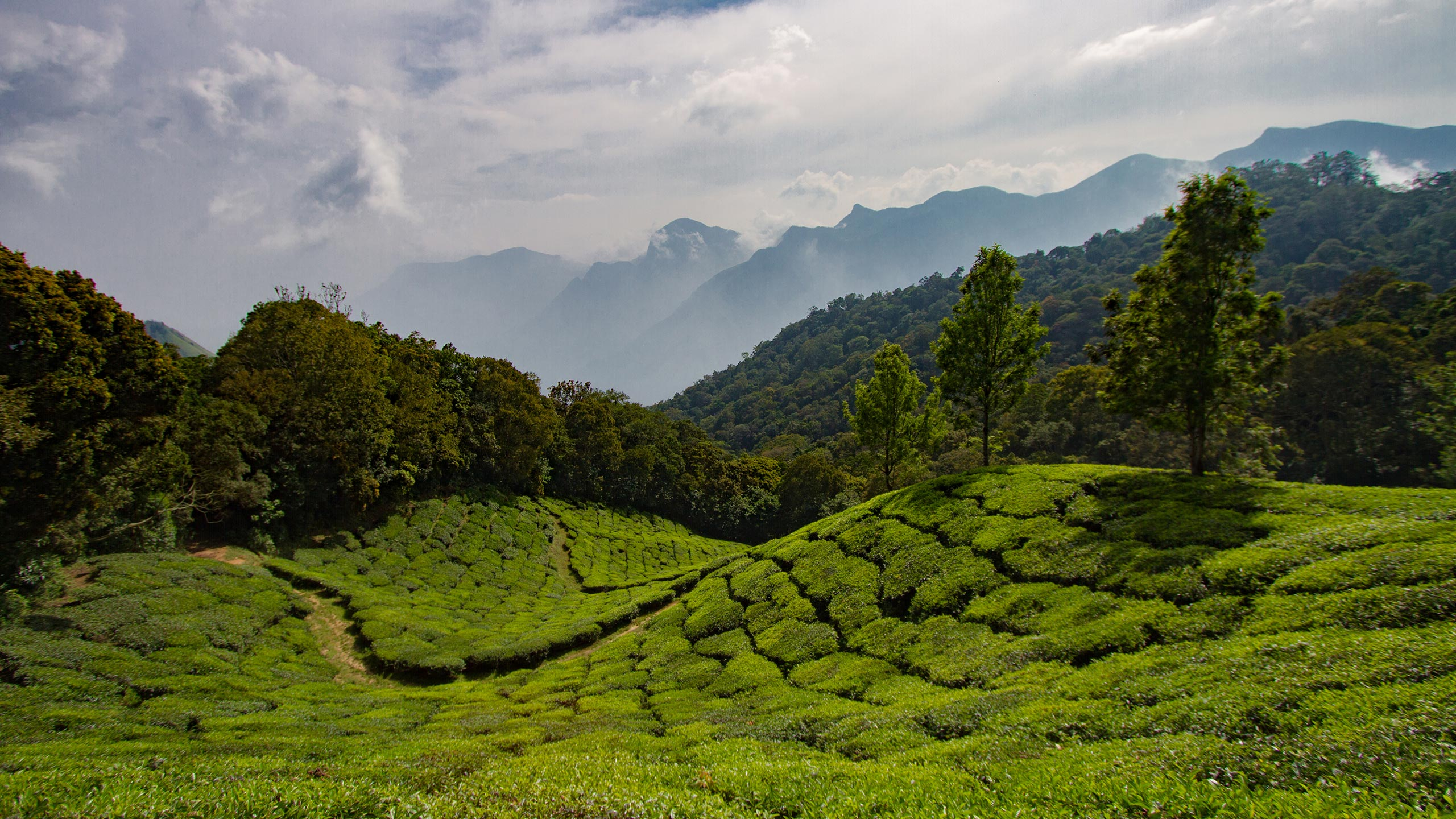 View of the Western Ghats from the Munnar tea fields